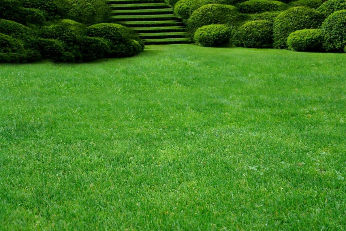 Красивый газон, правильный уход